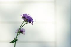 Blume, Abschluss oben, Hintergrund Lizenzfreies Stockfoto