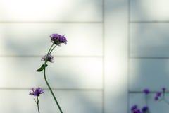 Blume, Abschluss oben, Hintergrund Lizenzfreie Stockbilder