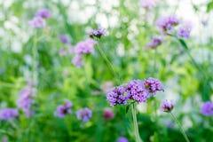 Blume, Abschluss oben, Hintergrund Stockfoto