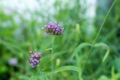 Blume, Abschluss oben, Hintergrund Lizenzfreie Stockfotos