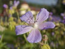 Blume auch Stockbilder
