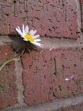 Blume auf Backsteinmauer Stockbilder