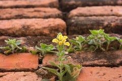 Blume auf Backsteinmauer. Stockbilder