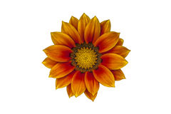 Blume auf Berg Bromo Lizenzfreies Stockbild
