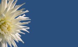 Blume auf blauem Hintergrund Lizenzfreies Stockbild