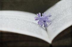 Blume auf Buch Lizenzfreies Stockfoto