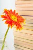 Blume auf Buchhintergrund stockbild