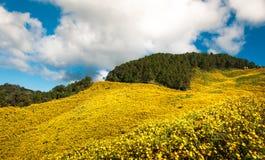 Blume auf dem Berg Stockbild