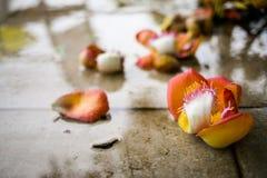 Blume auf dem Boden Lizenzfreies Stockfoto
