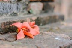 Blume auf dem Boden Stockfotografie