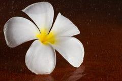 Blume auf dem braunen Hintergrund stockfotos