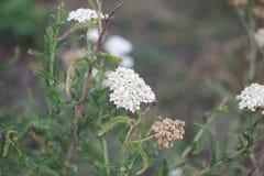 Blume auf dem Feld lizenzfreie stockfotos