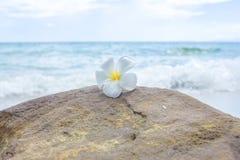 Blume auf dem Felsen mit Meerblickhintergrund Stockbild