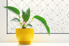 Blume auf dem Fensterbrett Lizenzfreie Stockfotografie