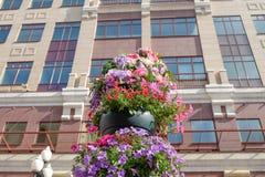 Blume auf dem Gebäudehintergrund Stockfoto