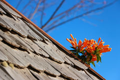 Blume auf dem hölzernen Dach Lizenzfreies Stockfoto