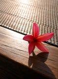 Blume auf dem Leben der Patiotabelle noch Stockbilder