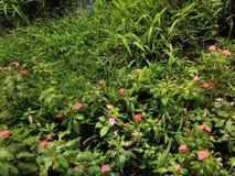 Blume auf dem Reisgebiet Lizenzfreie Stockfotografie