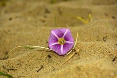 Blume auf dem Sand lizenzfreie stockbilder