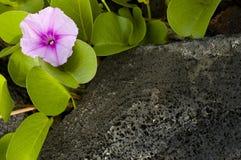 Blume auf den Felsen. Stockfoto