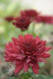Blume auf der Außenseite lizenzfreie stockbilder