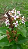 Blume auf der Gartenarbeit Lizenzfreies Stockfoto