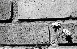 Blume auf der Wand Stockfotografie