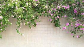 Blume auf der Wand Lizenzfreie Stockfotografie