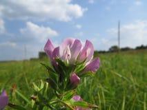Blume auf der Wiese Lizenzfreies Stockbild