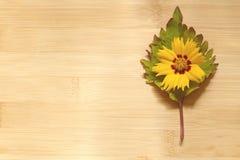 Blume auf einem Blatt Stockfotos