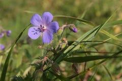 Blume auf einem Feld, Wiese Lizenzfreie Stockfotos