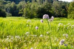 Blume auf einem Gebiet lizenzfreie stockfotografie