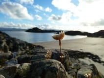 Blume auf einem Strand stockfotos