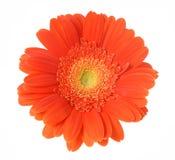 Blume auf einem weißen Hintergrund Lizenzfreie Stockfotografie
