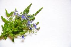 Blume auf einem weißen Hintergrund Stockfotos