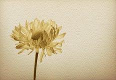 Blume auf einem Weinlesepapier Stockbild
