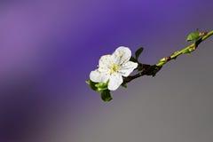 Blume auf einem Zweig Lizenzfreie Stockbilder