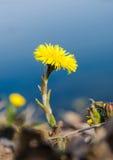 Blume auf einer Bank stockfoto