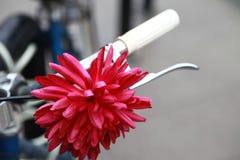 Blume auf Fahrrad Stockfoto