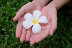 Blume auf Händen Lizenzfreie Stockbilder
