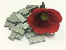 Blume auf Heftklammern Stockfotos