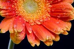 Blume auf Hintergrund Stockfotos