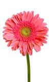 Blume auf Hintergrund Stockfoto