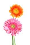 Blume auf Hintergrund Lizenzfreies Stockfoto