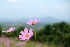 Blume auf Hintergrund des blauen Himmels stockbild