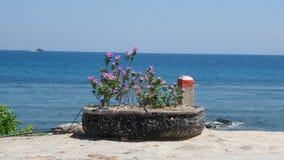 Blume auf Insel Stockbilder