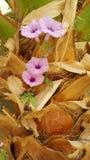 Blume auf Palme lizenzfreies stockfoto