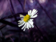 Blume auf Purpur lizenzfreie stockbilder