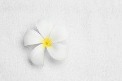 Blume auf Reinigungstuch-Beschaffenheitsfarbweiß stockbilder