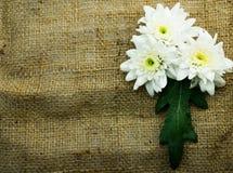 Blume auf Sackrahmenhintergrund Lizenzfreie Stockfotografie